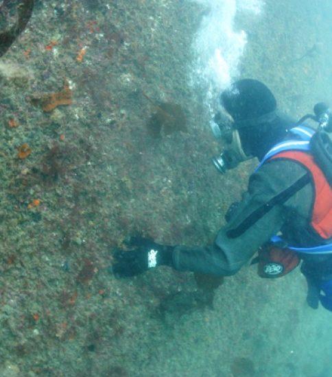 漁港・港湾・海岸点検調査の様子(水中)