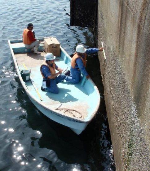 漁港・港湾・海岸点検調査の様子(船上)